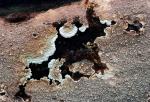 Braunroter Kammpilz-Phlebia rufa